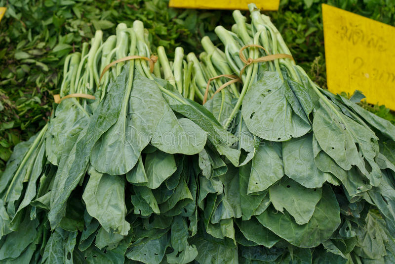 Kale στοκ φωτογραφίες με δικαίωμα ελεύθερης χρήσης