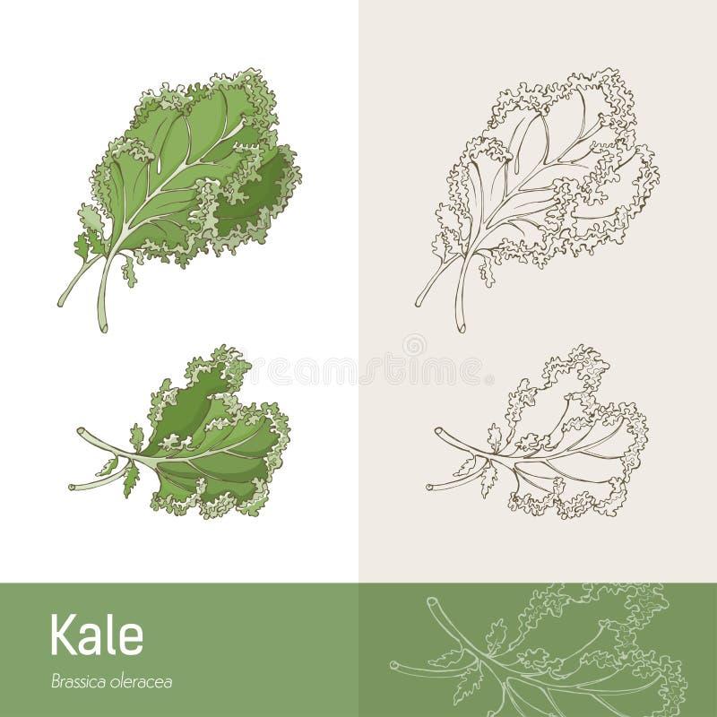 kale ilustração do vetor