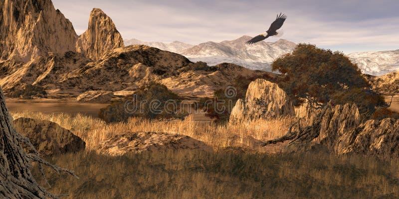 Kale Adelaar in Colorado Rockies stock afbeeldingen