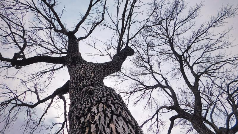 Kale Bomen tijdens Wintertijd stock afbeelding