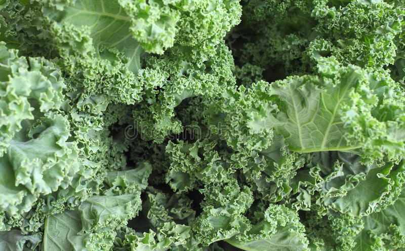 Kale. Close-up of a bunch of kale at a local farmers market stock photo