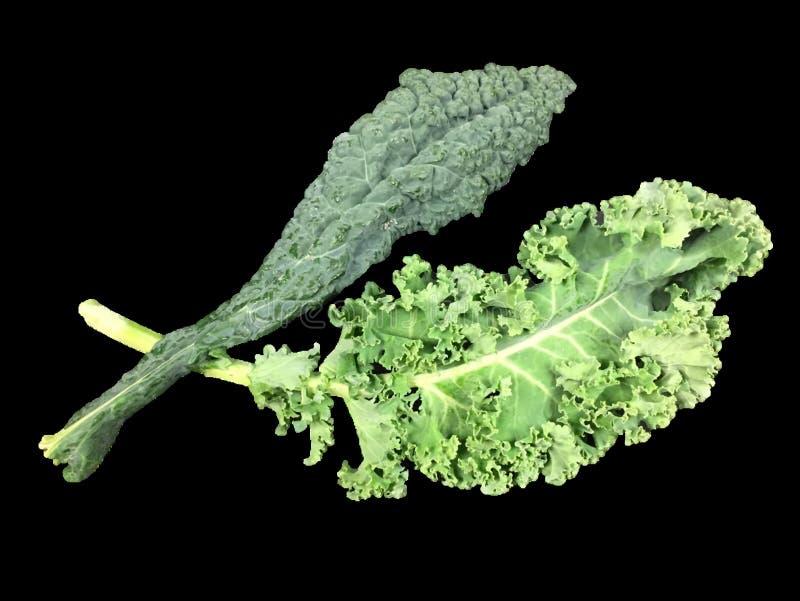 Kale_curly And Lacinato (aka Dinosaur Or Tuscan) Free Public Domain Cc0 Image