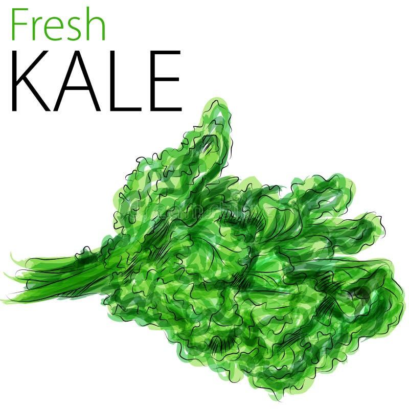 Kale fresco ilustração royalty free