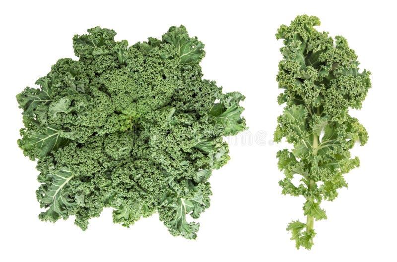 Kale kapusty zieleni liścia jarzynowego Zdrowego łasowania Super foods zdjęcia stock