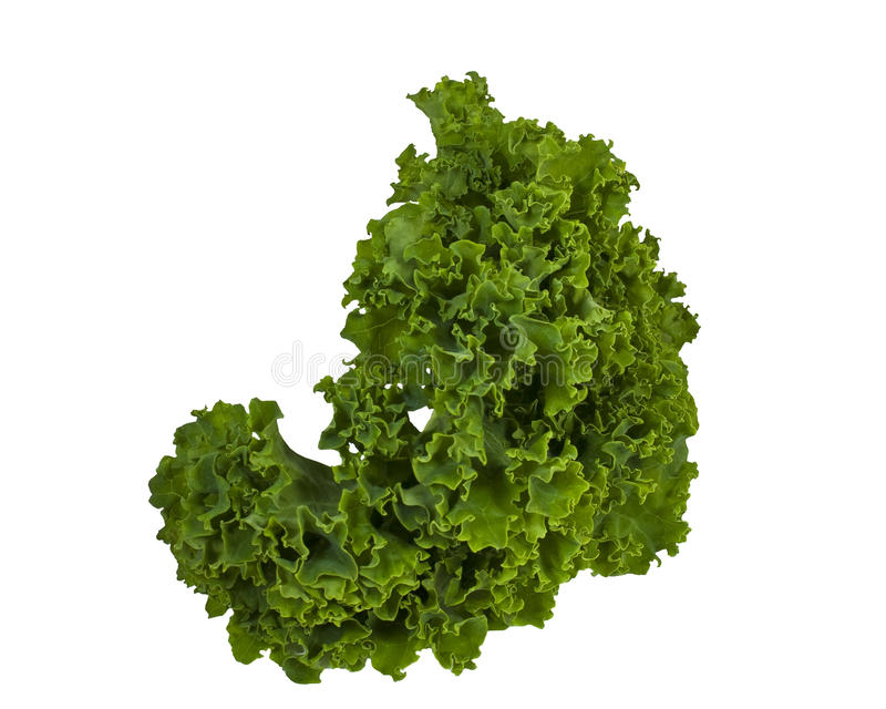 Kale Leaf royalty free stock images