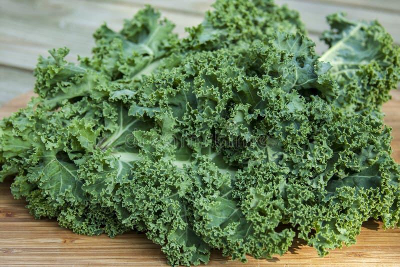 Kale Leaf Cabbage stock photos
