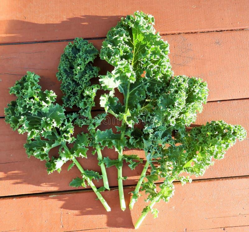 Kale Leaves Free Public Domain Cc0 Image