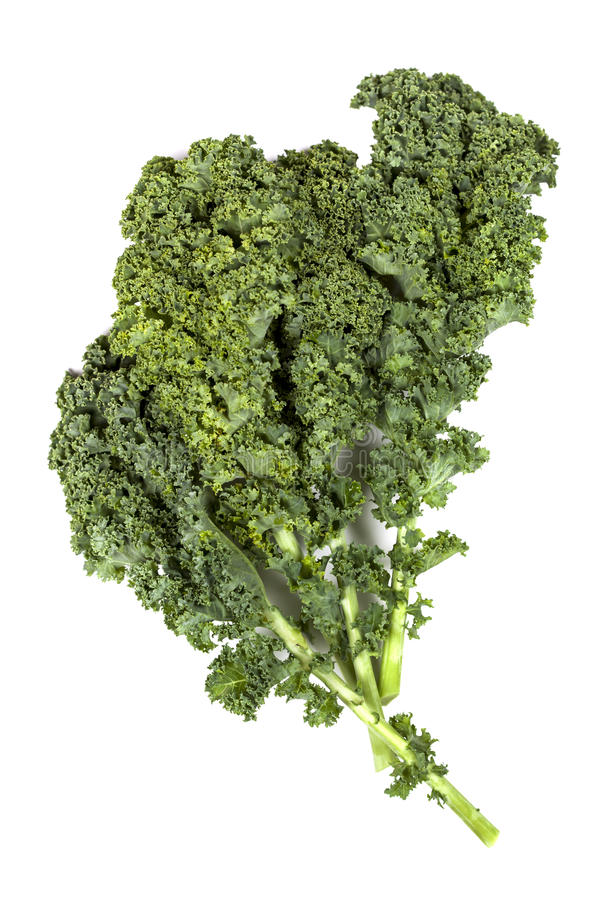 Kale. Leaves on white background royalty free stock photography
