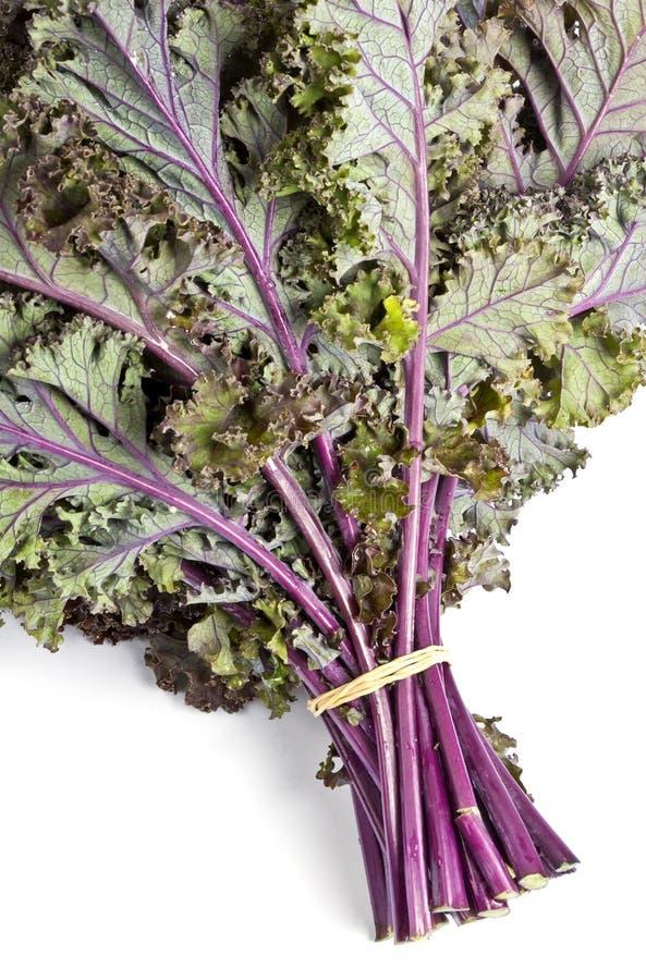 Kale roxo fotografia de stock royalty free