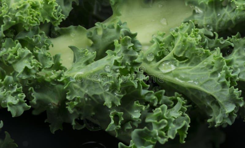 Kale stock photos