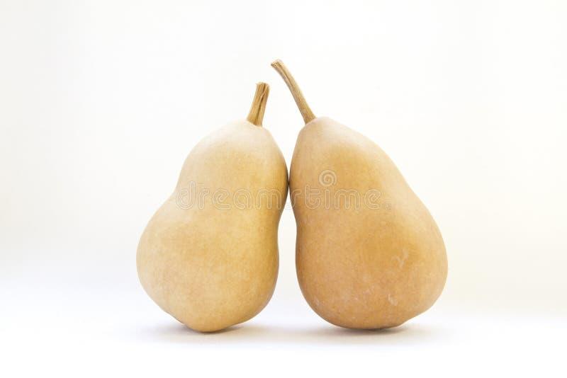 Kalebasboom. geïsoleerdh op witte achtergrond royalty-vrije stock foto