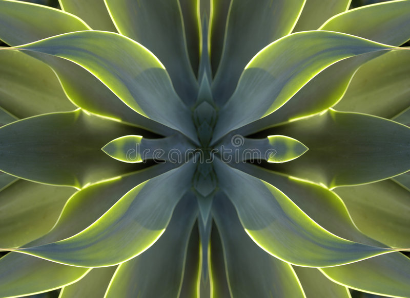 kaleidoscope сердца столетника 7 стоковые фотографии rf