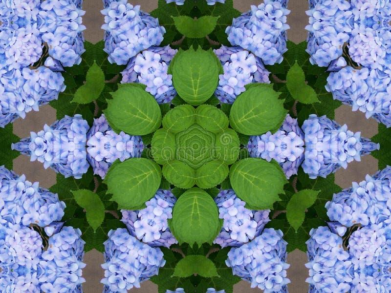 kaleidoscope hydrangeas стоковое фото