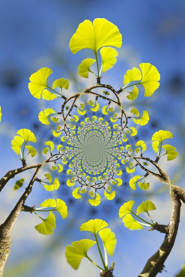 Kalejdoskopowy wzór miłorzębu drzewo obrazy royalty free