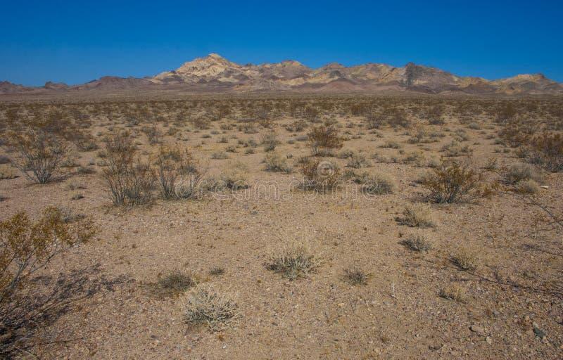 Kalifornia, Śmiertelny Dolinny park narodowy, Pustynna roślinność zdjęcie royalty free