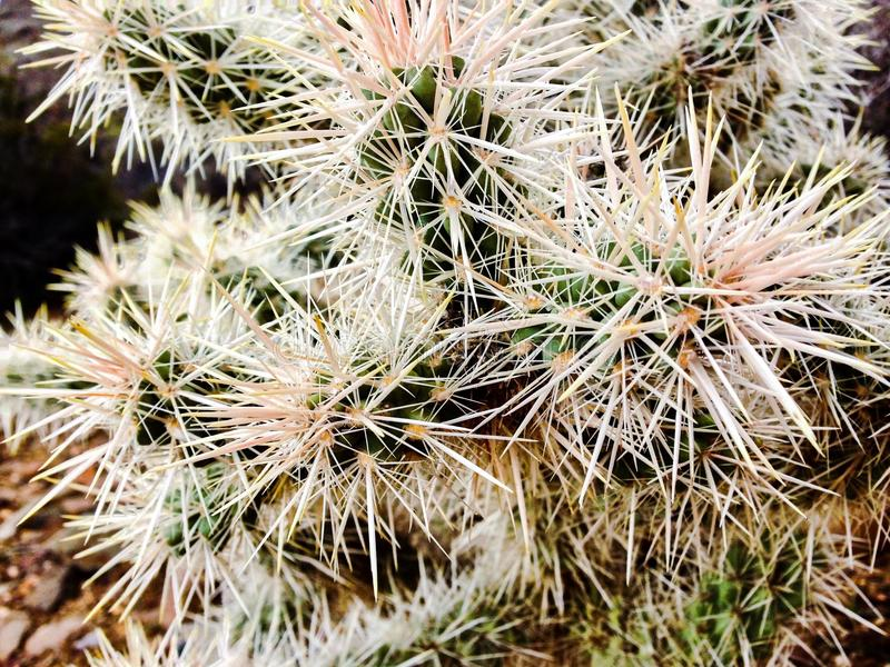 Kalifornia kaktusy obraz royalty free