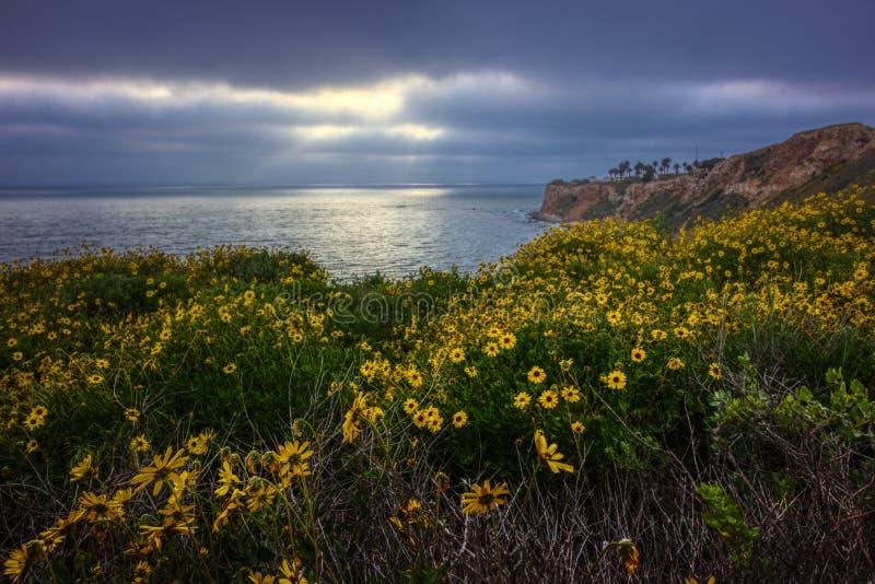 Kalifornia Super kwiat 2017, Rancho Palos Verdes obraz royalty free