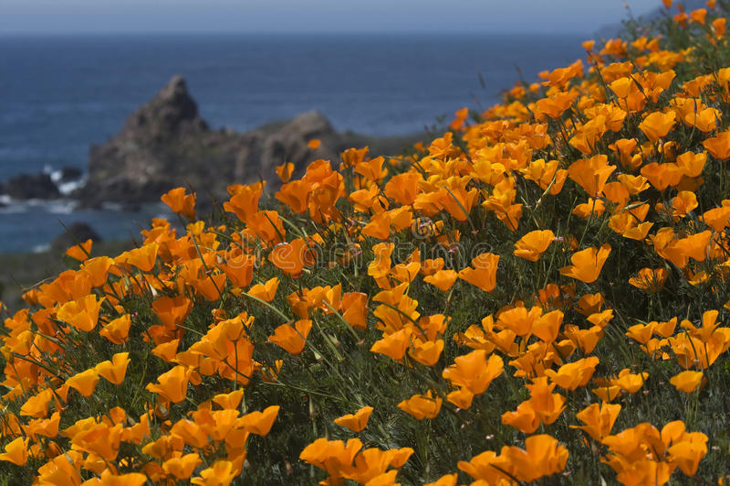Kalifornia wybrzeże w wiośnie zdjęcie royalty free