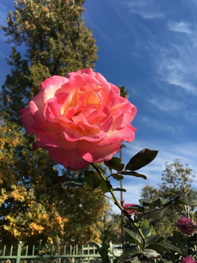 Kalifornien förälskelse royaltyfri foto