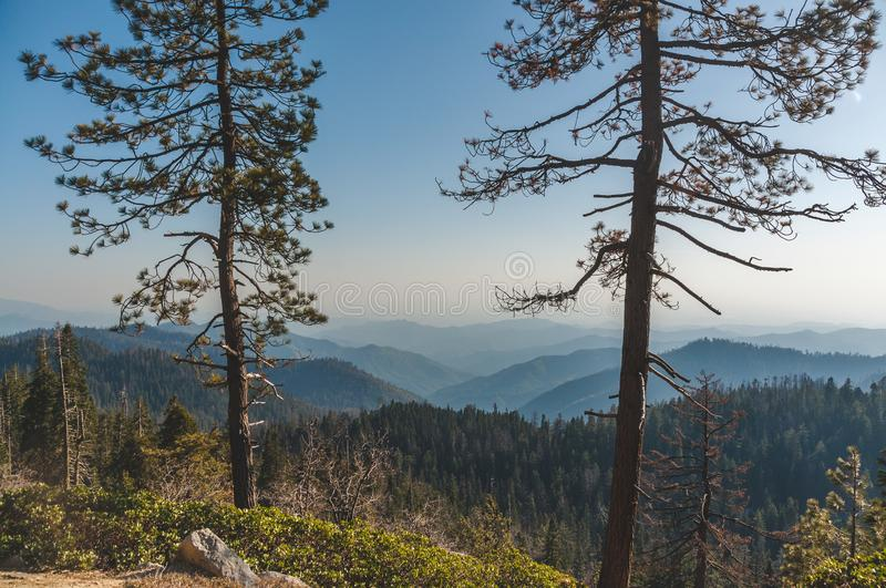 Kalifornien Greatest Spots: Sequoia och King's Canyon (Generals Highway, Giant Sequoia National Monument, USA) arkivfoton