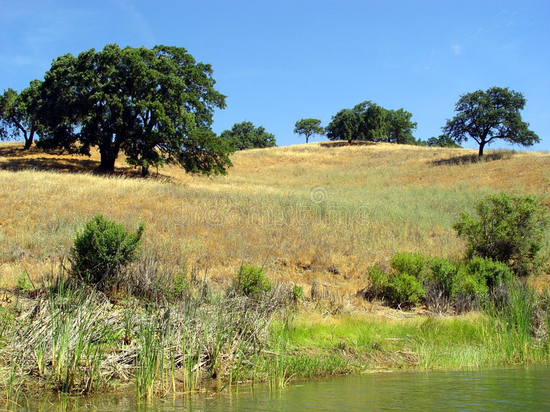 Kalifornien-Hügel (2) lizenzfreies stockbild