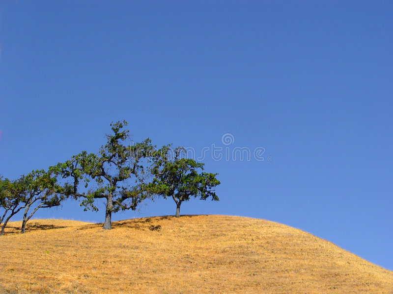 Kalifornien-Hügel und Bäume lizenzfreie stockbilder