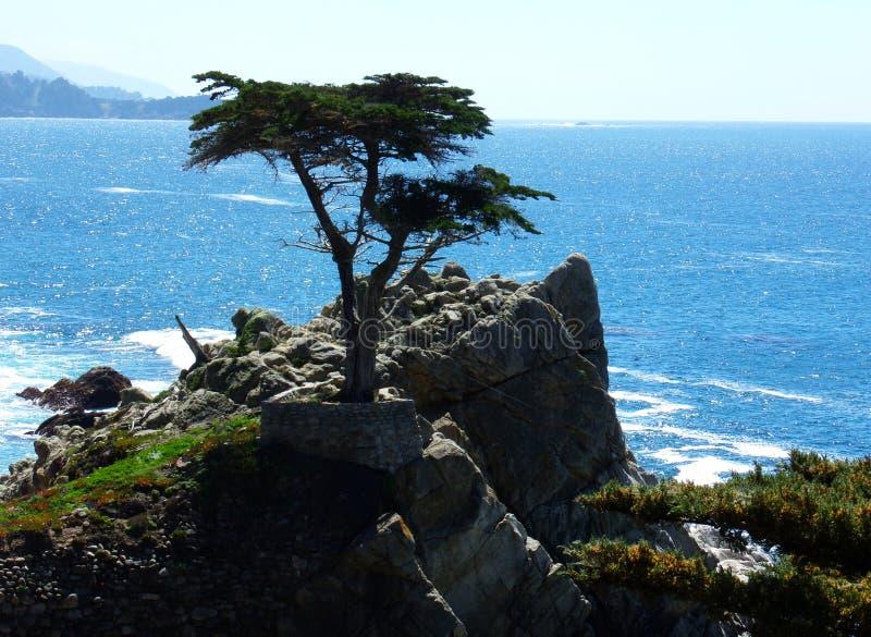 Kalifornien kust- klippor med ett träd som ner växer på kanten - ingen huvudväg för vägtur 1 royaltyfri bild