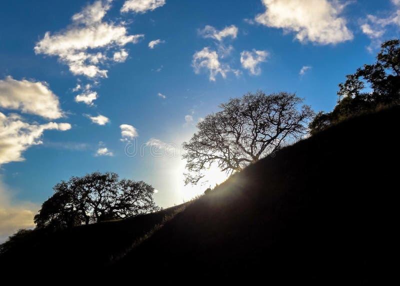 Kalifornien landskap Solsignalljus till och med ett träd arkivfoton