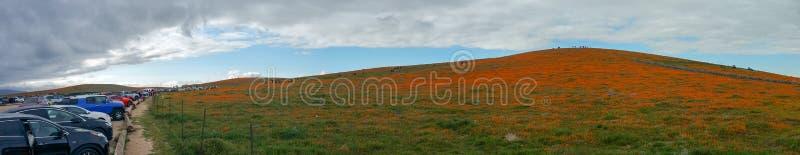 Kalifornien-Mohnblumenfeld in der Wüste am bewölkten Tag mit den Sonnenstrahlen, die durch Wolken Eschscholzia-californica und ob stockfoto