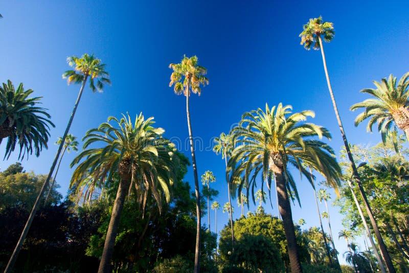 Kalifornien-Palmen stockbild