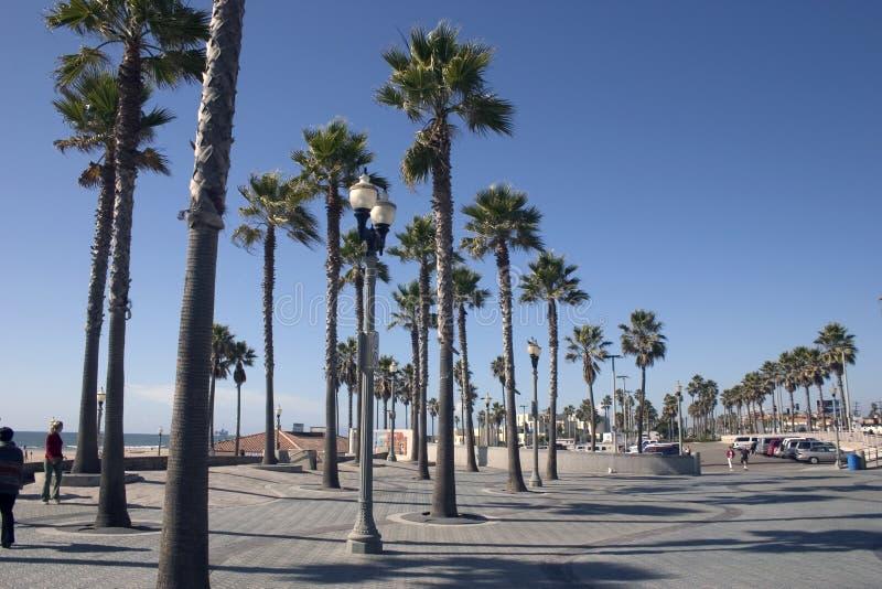 Kalifornien-Palmen lizenzfreie stockfotografie