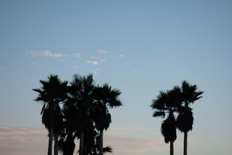 Kalifornien-Palmen und Himmel stockfotografie