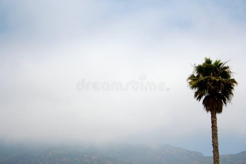 Kalifornien palmträd i misten arkivbilder