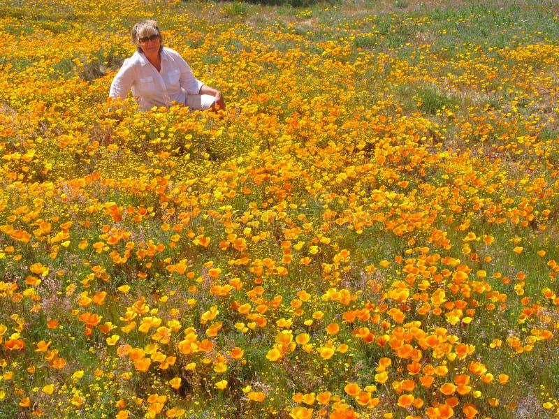 Kalifornien Poppy Enjoyment lizenzfreie stockbilder