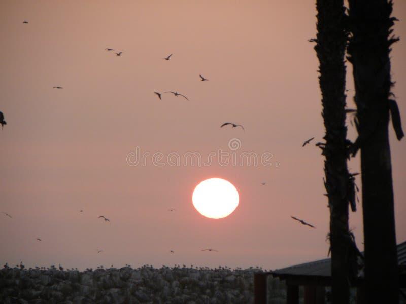 Kalifornien sol arkivfoton