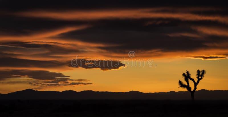 Kalifornien solnedgång med Joshua Tree fotografering för bildbyråer