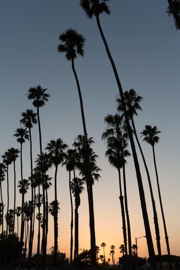 Kalifornien-Sonnenuntergang Palmereihen in Santa Barbara stockfotografie