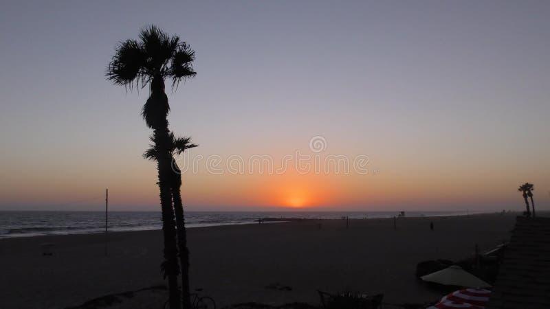 Kalifornien-StrandPalmen, die im Wind durchbrennen stock video footage
