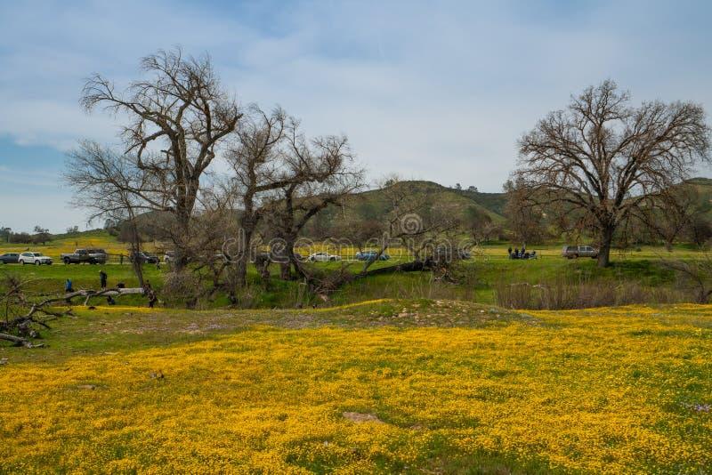 Kalifornien-Superblüte 2019 Feld von schönen wilden gelben Blumen in Carrizo-Ebene lizenzfreies stockbild