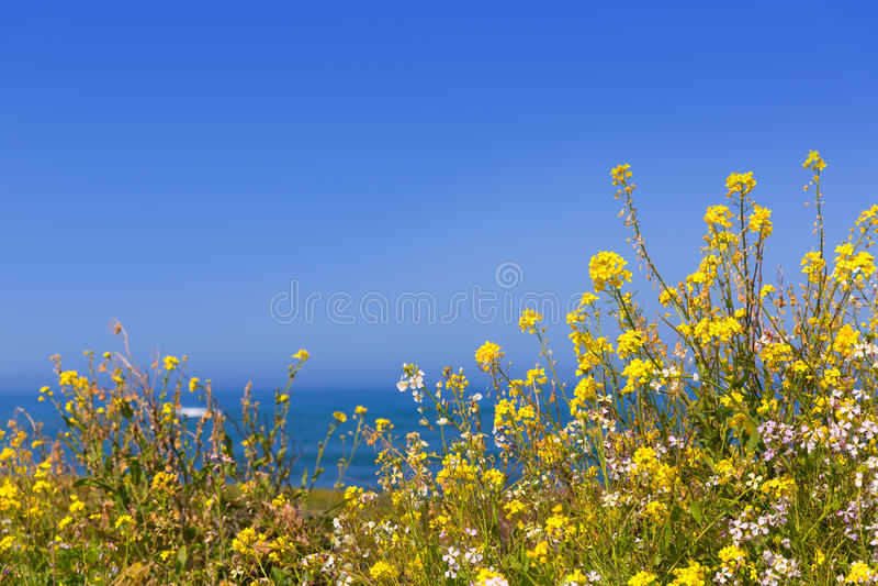 Kalifornien-Taubenpunktfrühling blüht in Cabrillo Hwy Küstenh stockbilder