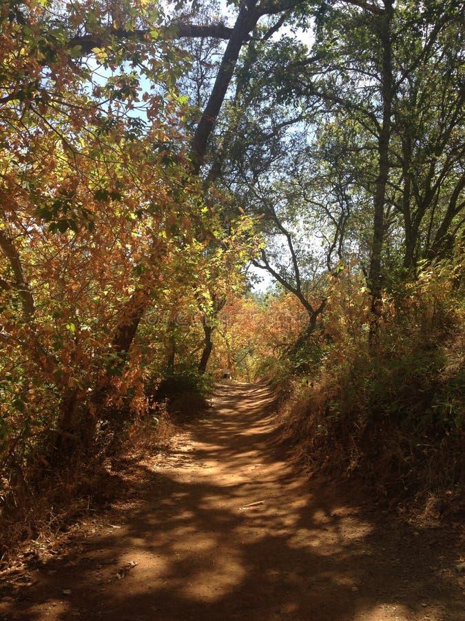 Kalifornien versteckter Fall-Nationalpark-Natur-Weg stockfotografie