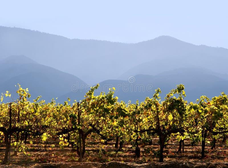 Kalifornien vinodling royaltyfri fotografi