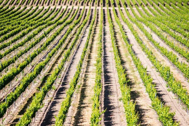 Kalifornien-Weinberg lizenzfreies stockfoto