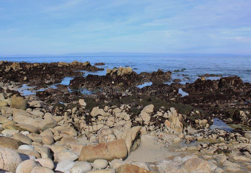 Kalifornijczyk Tidepools obrazy stock