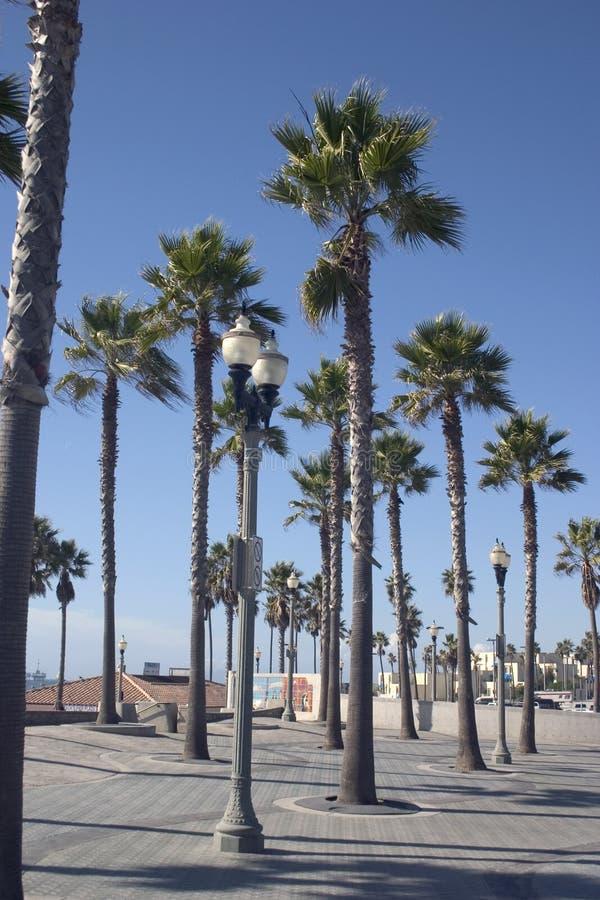 Download Kalifornijskie dłonie zdjęcie stock. Obraz złożonej z drzewa - 38456