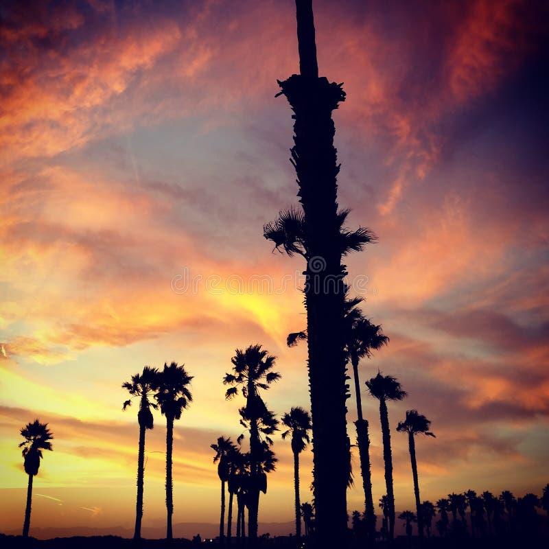 kalifornijskie słońca obrazy royalty free