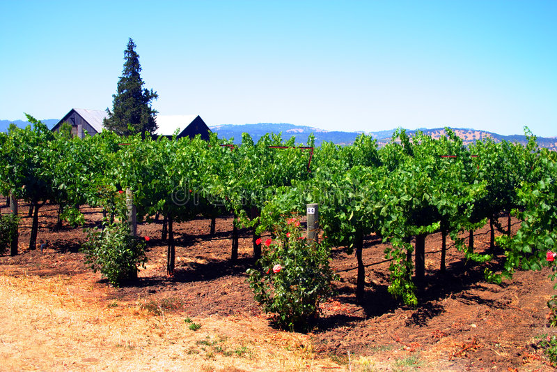 kalifornijskie sonoma napa valley zdjęcie royalty free