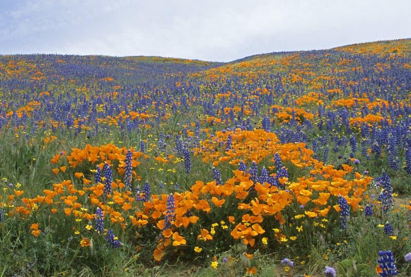 Kalifornijskie Wiosna Zdjęcia Stock