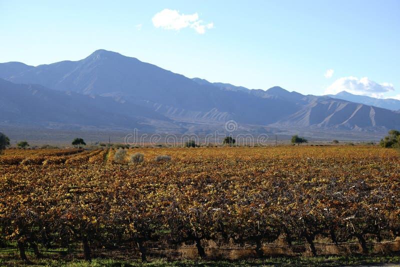 Kalifornischer Wein stockbild
