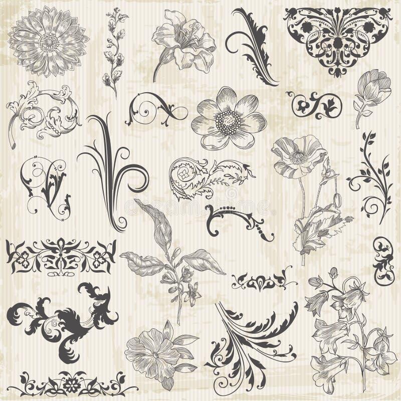 Kaligraficzni kwiatu projekta elementy ilustracji